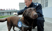 Police dog on duty for first time in Chengdu