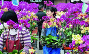 Flower power backs Zhangzhou growth