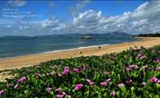Subtropical scenery you shouldn't miss in Xiamen