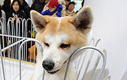 5th Shanghai Pet Fair held in east China