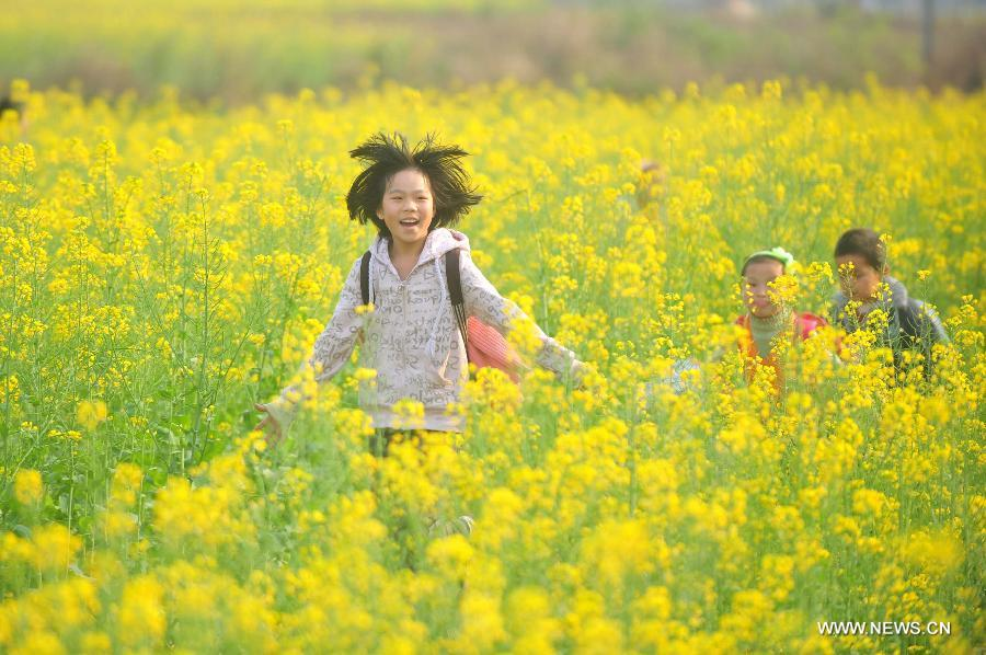 Young students walk home after school in the field of rape flowers in Rong'an County of southwest China's Guangxi Zhuang Autonomous Region, March 5, 2013. Rape flowers began to blossom as temperature went up here, attracting large amount of tourists. (Xinhua/Huang Xiaobang)