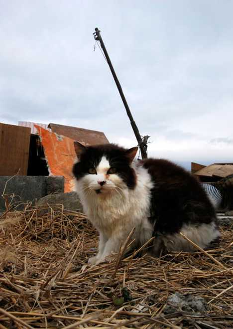 Cats on Tashiro island, Japan (Source: gmw.cn)