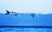 Qinghai Lake's coverage expands due to protection