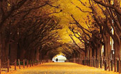 Top 10 fairyland-like tree tunnels