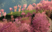 Exploring China's spring destinations