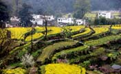 China's most beautiful countryside: Wuyuan