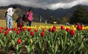 Tourists stroll in tulip garden in Srinagar