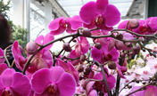 Orchid Show held in Frankfurt, Germany