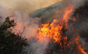 Forest fire rages in SW China's Yunnan