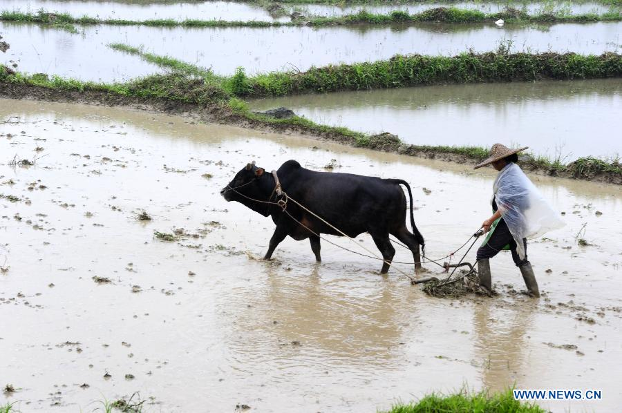A farmer works in the field at Xinyin Village of Siba Town in Hechi City, south China's Guangxi Zhuang Autonomous Region, May 5, 2013. Sunday is the beginning of the 7th solar term in Chinese lunar calendar, which indicates the coming of summer. (Xinhua/Wu Yaorong)