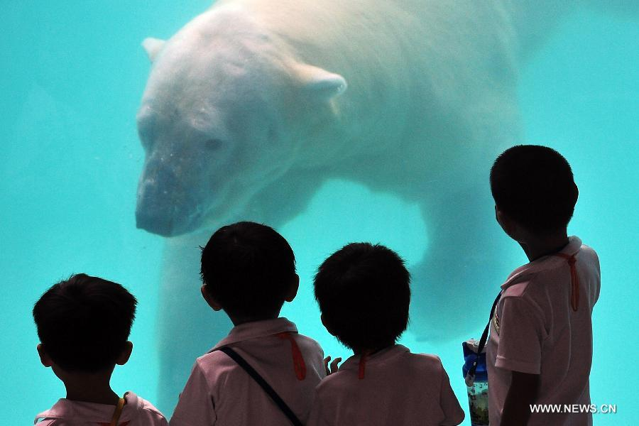 Children closely watch the locally bred polar bear Inuka at the Singapore Zoo, May 29, 2013. The Singapore Zoo celebrated the moving of Inuka, the first polar bear born in the Singapore Zoo and the tropics, into its new enclosure by hosting a housewarming ceremony on Wednesday. (Xinhua/Then Chih Wey)