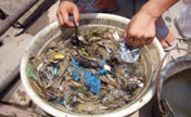 Industrial wastes hit fishing in Zhejiang