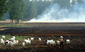 Farmers burn wheat stubble despite ban
