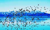 Birds enjoy summer on Sayram Lake