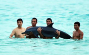 Abuse by tourists led to stranded dolphin's death