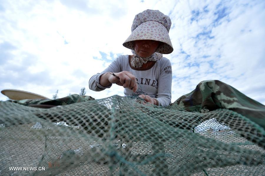 A woman fixes a fishing net in the Mongolian-Tibetan Autonomous Prefecture of Haixi, northwest China's Qinghai Province, July 13, 2013. The annual output of aquaculture of the Keluke Lake has reached 200 tons so far, with the production value exceeding 4 million yuan (651,600 U.S. dollars). (Xinhua/Wang Bo)