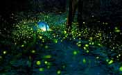 Come and see fireflies in Nanjing