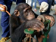 Animals receive health examination at Wuxi Zoo