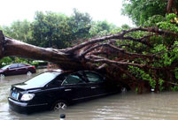Typhoon Fitow affects 4.56 million people in east China