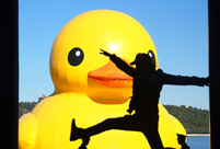 Admirers to bid joyful goodbye to Rubber Duck