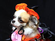Pet costume competition