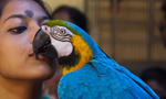 Bird show opens to public in Calcutta, India
