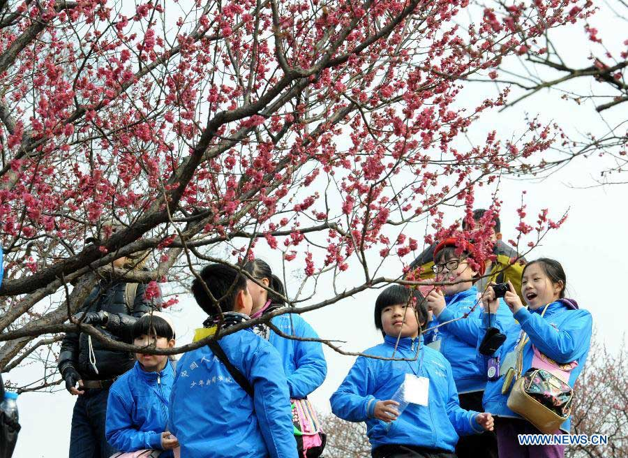 A student poses for photos during the 2014 Nanjing International Plum Blossom Festival in Nanjing, capital of east China's Jiangsu Province, Feb. 20, 2014. The 40-day festival opened here on Thursday. (Xinhua/Sun Can)